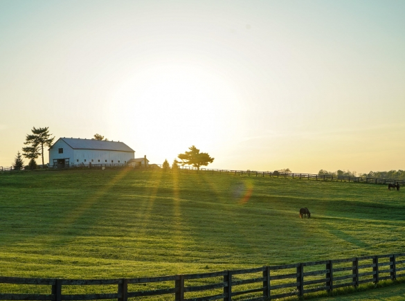 sunrise landscape photo of a farm with barn, fence and animals